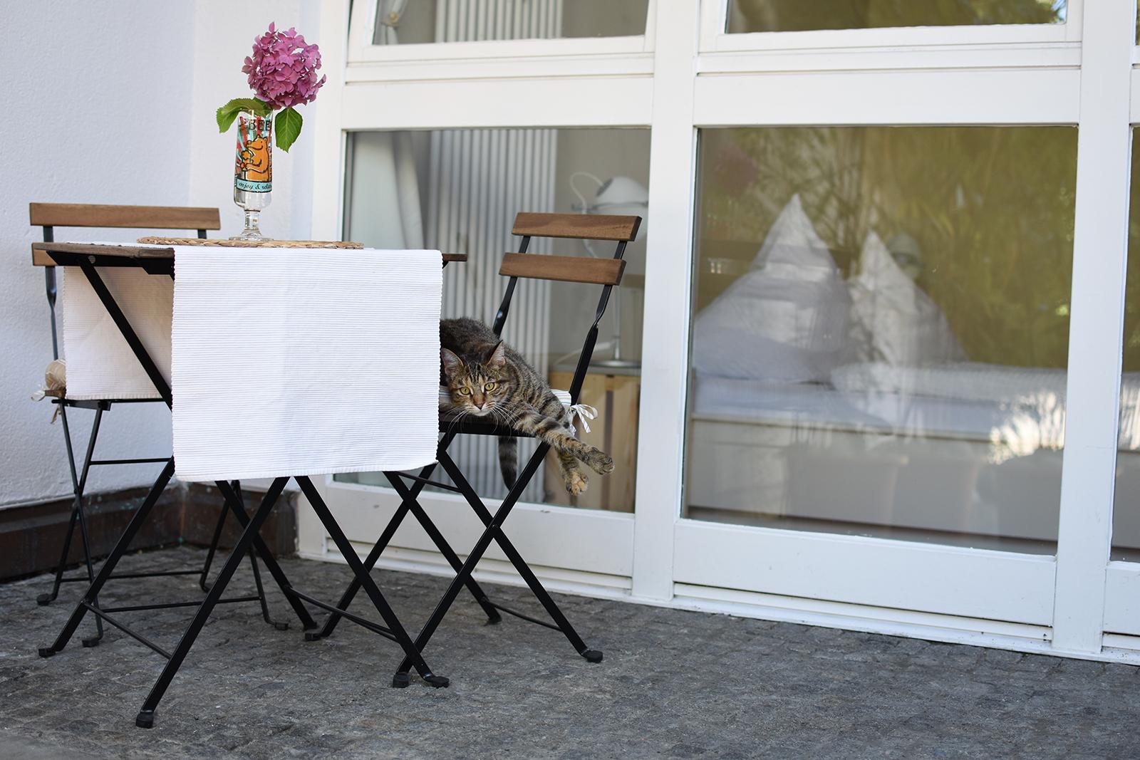 Ferienwohnung am Bodensee: City Apartment 1 - Außenansicht