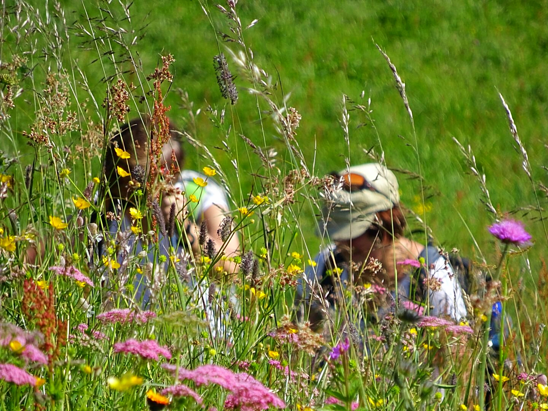 Blumenwanderung auf die Mauthner Alm