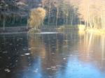 Hofwaldteich