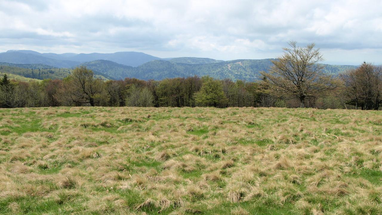 Chaume du Grand Ventron vue sur le Ballon d'Alsace et de Servance
