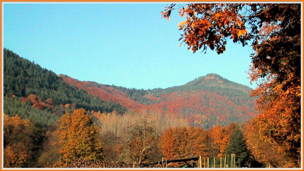 Le Grand Hohnack  en automne vu de Zimmerbach