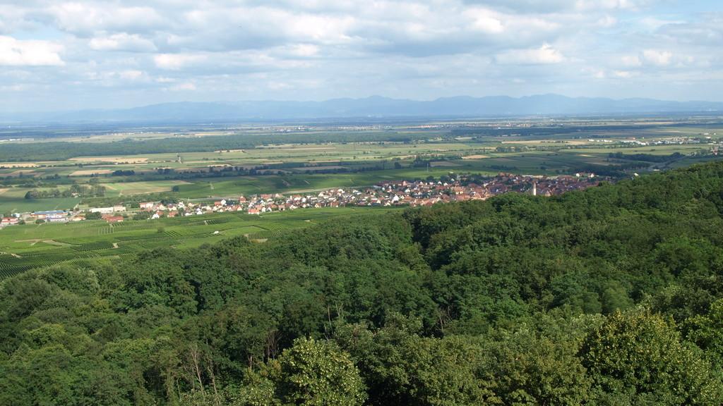 Vue sur la paline, Pfaffenheim et la Forêt Noire
