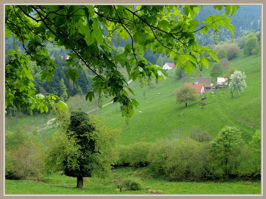 Wasserbourg au printemps