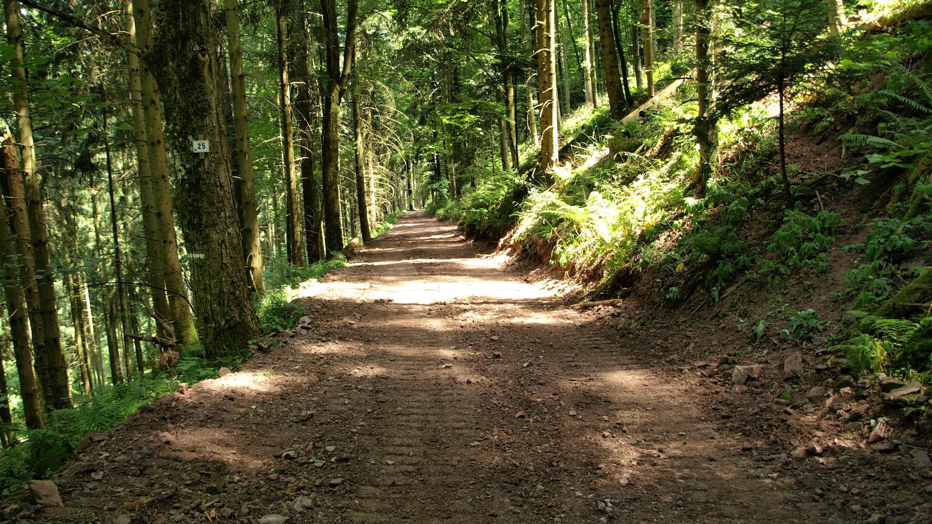 Chemin qui descend du Meyerhof