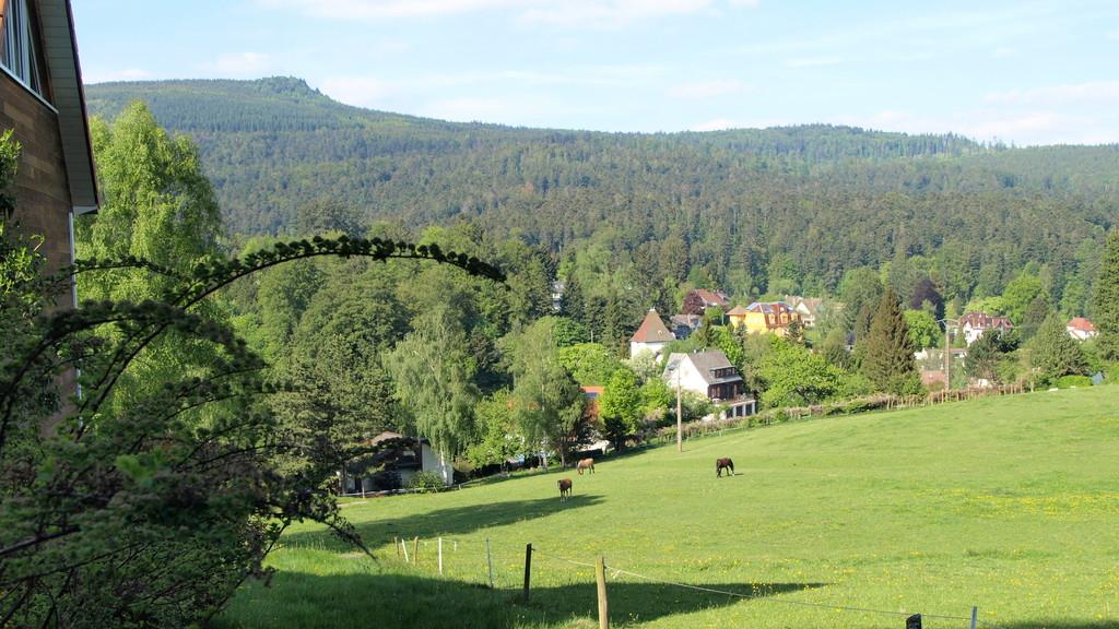 Witterthalhof