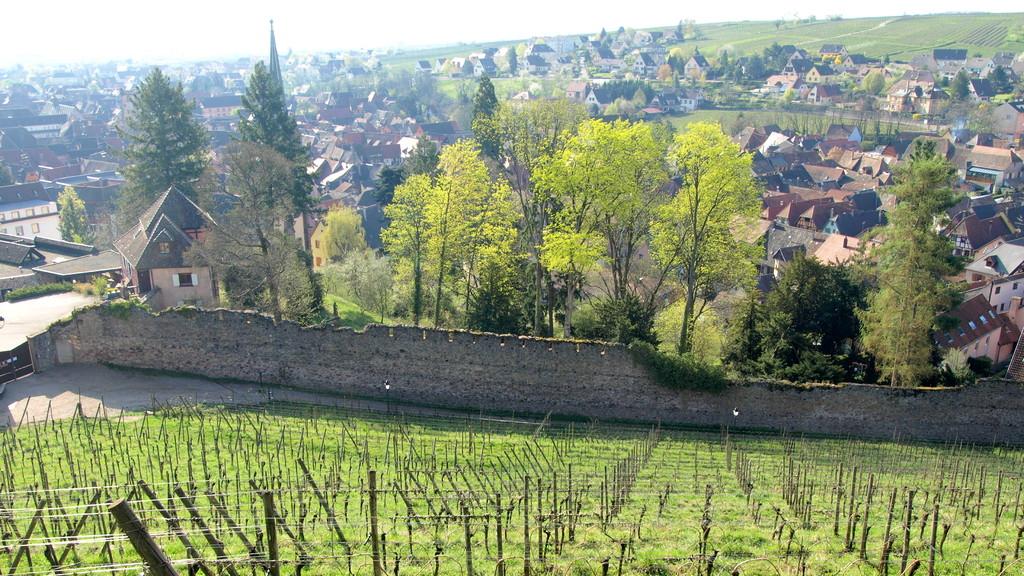 Ribeauvillé : restes du mur d'enceinte du château du bas