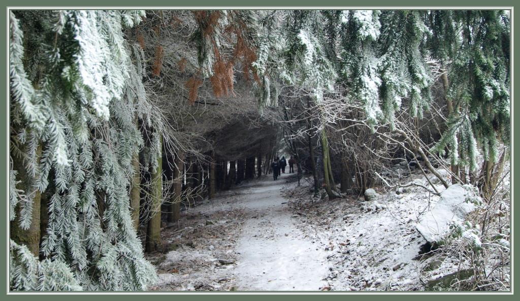 La Hohe Schwaerz en hiver