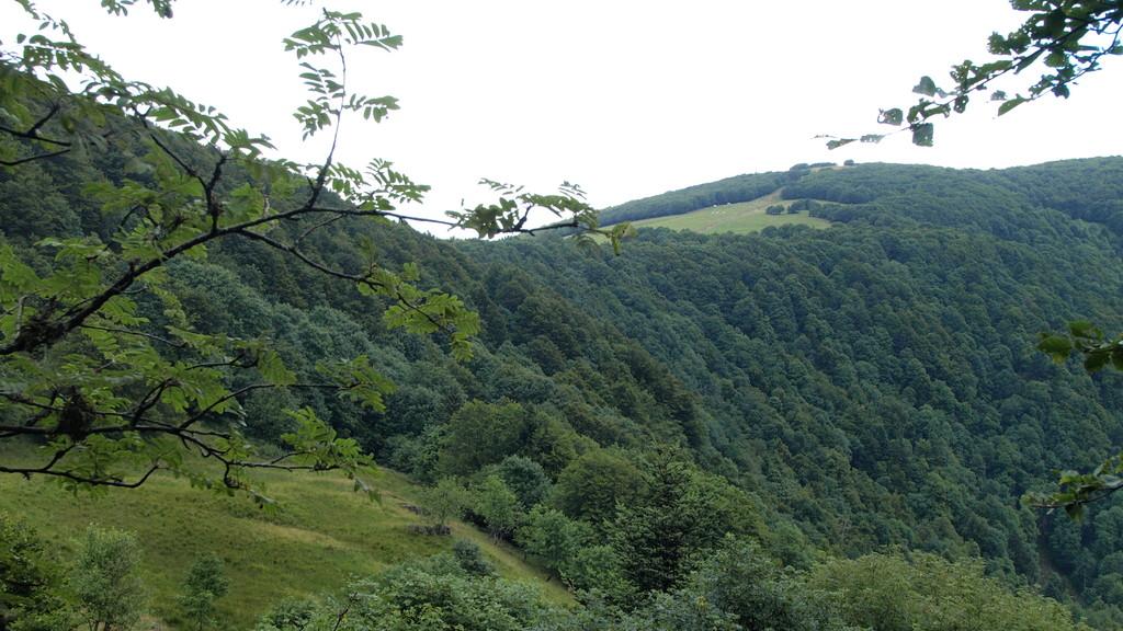 Pferrey, vue sur le collet du Rainkopf