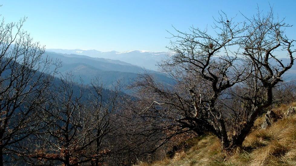 Au sommet du Stauffen : source Panoramio Tuefeli