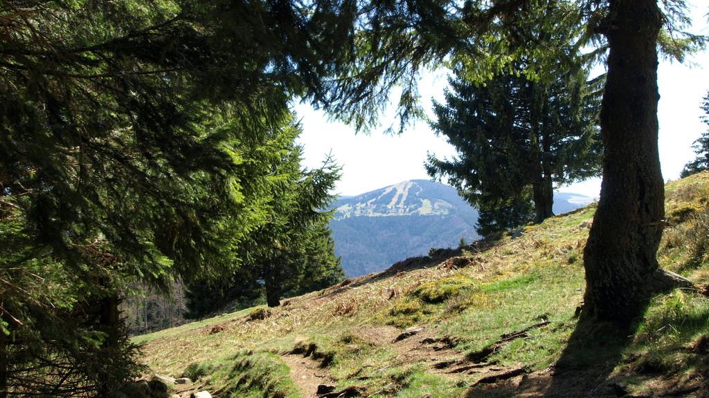 Vue sur le Schnepfenried