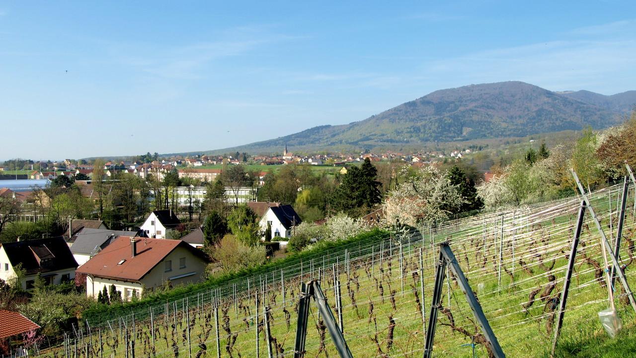 Mannberg - vue sur Wuenheim et le Hartmannswillerkopf