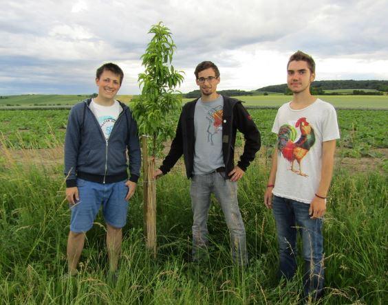 Daniel Gepp, Franz Mathias und Johannes Seidl vor einem stattlichen Pfirsichbäumchen, der heuer bereits eine schöne Frucht trägt.