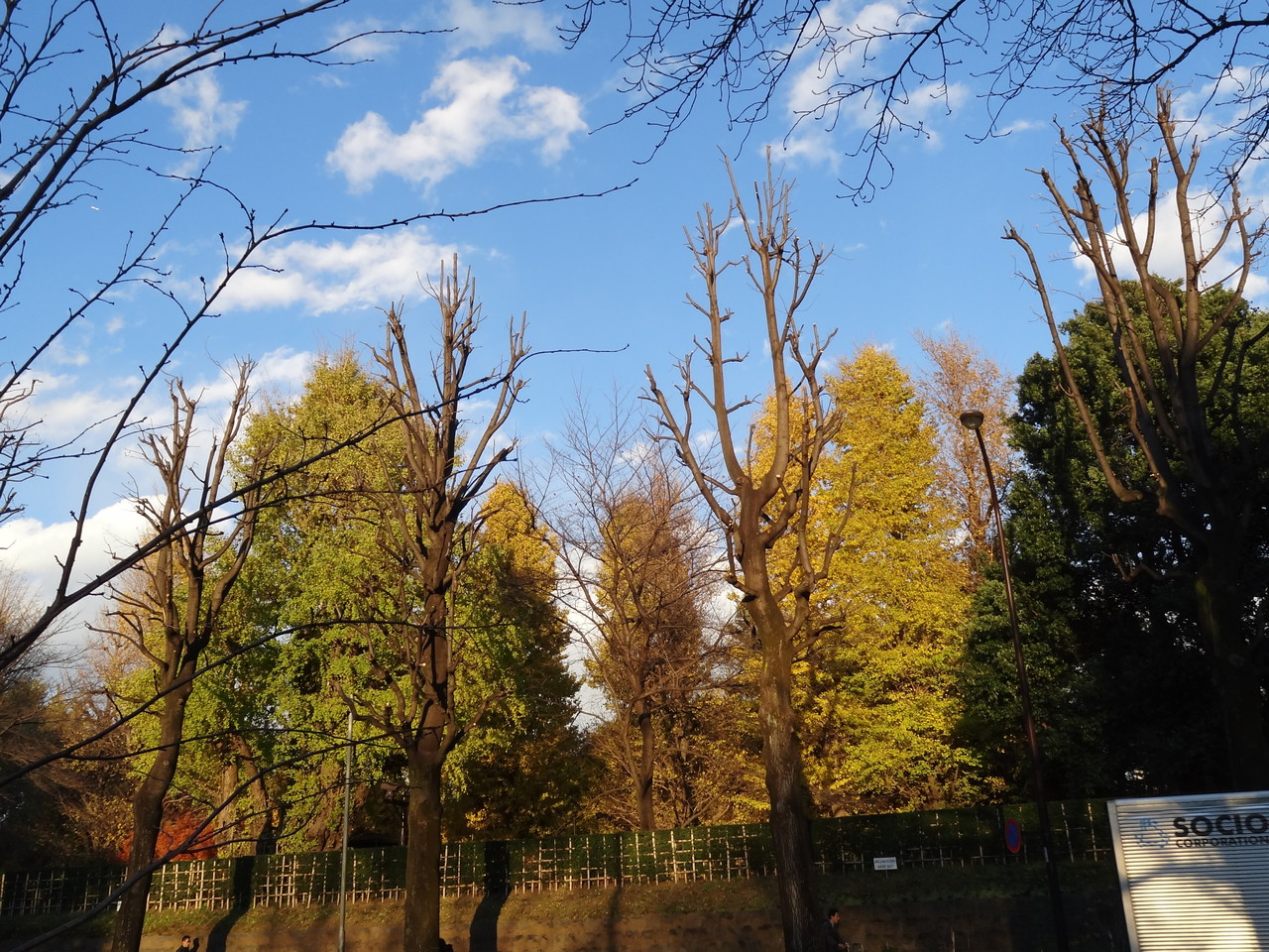 東宮御所の木々