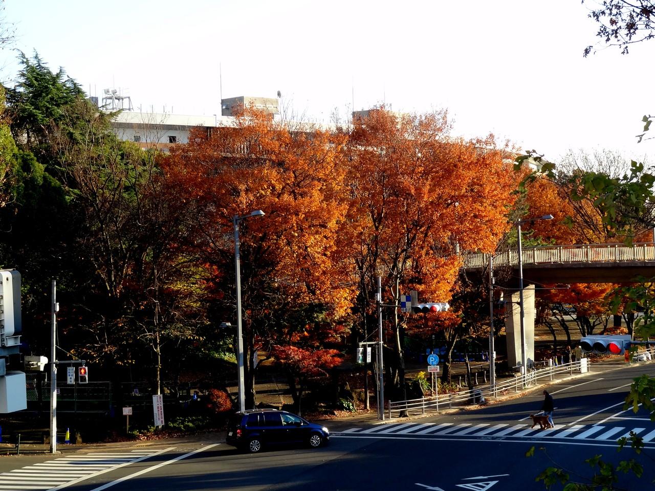 外苑橋から外苑西通り青山通り方面を望む、後ろは国立競技場