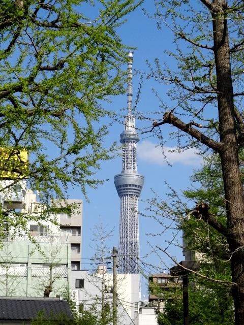 台東区浅草2丁目浅草寺境内からの東京スカイツリー