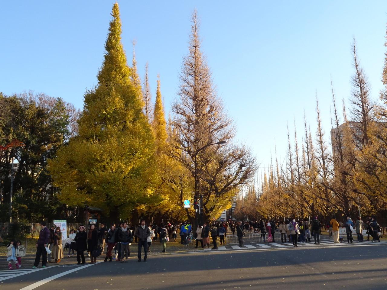 いちょう並木、絵画館前広場より青山通り方面を望む