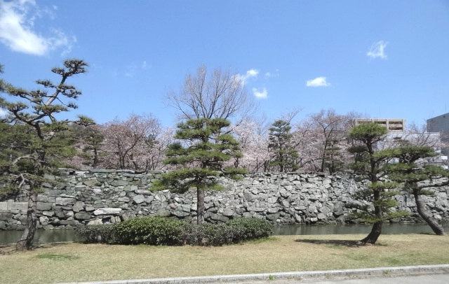 下乗橋横のお堀の桜