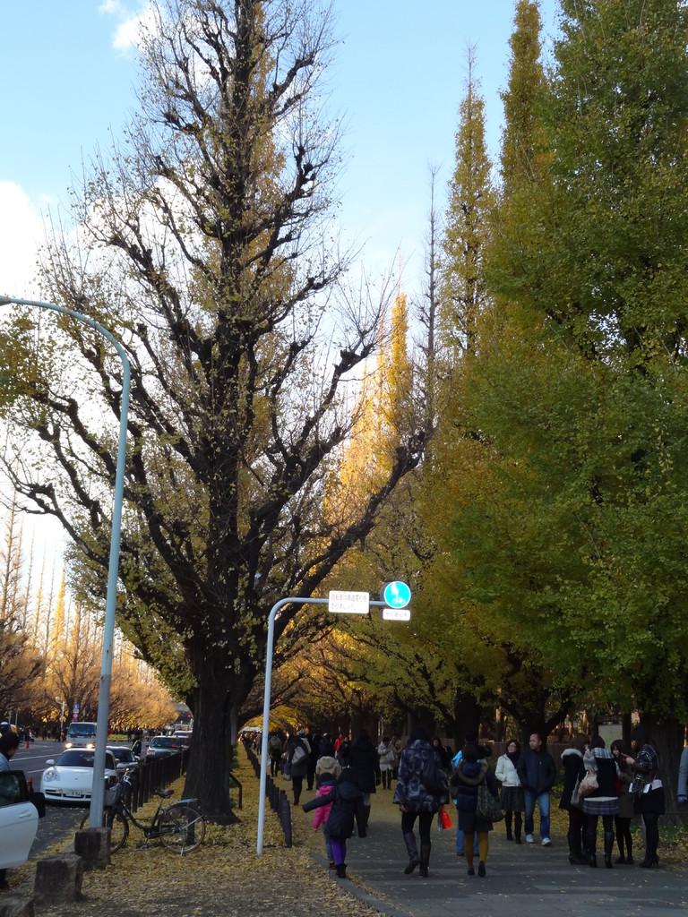 いちょう並木、青山通りより絵画館方面を望む