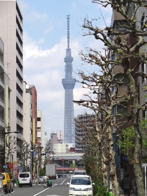中央区東日本橋2丁目薬研堀からの東京スカイツリー