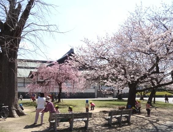 徳島城博物館としだれ桜