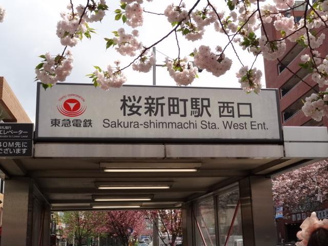 東急田園都市線 桜新町駅出口の看板を隠すように咲く