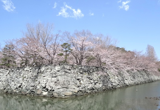 月見櫓跡の桜
