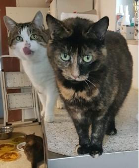 Püppi und Patty