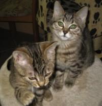 Lilly und Lissy