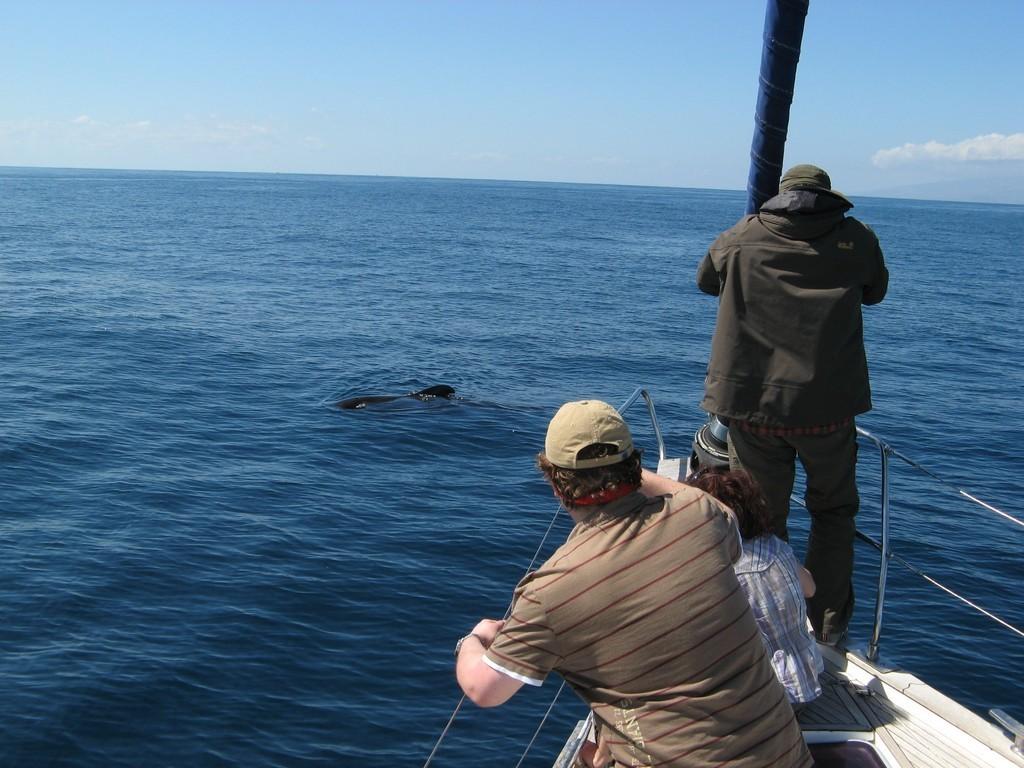 Ausschau halten nach Walen, Delfinen und Meeresschildkröten