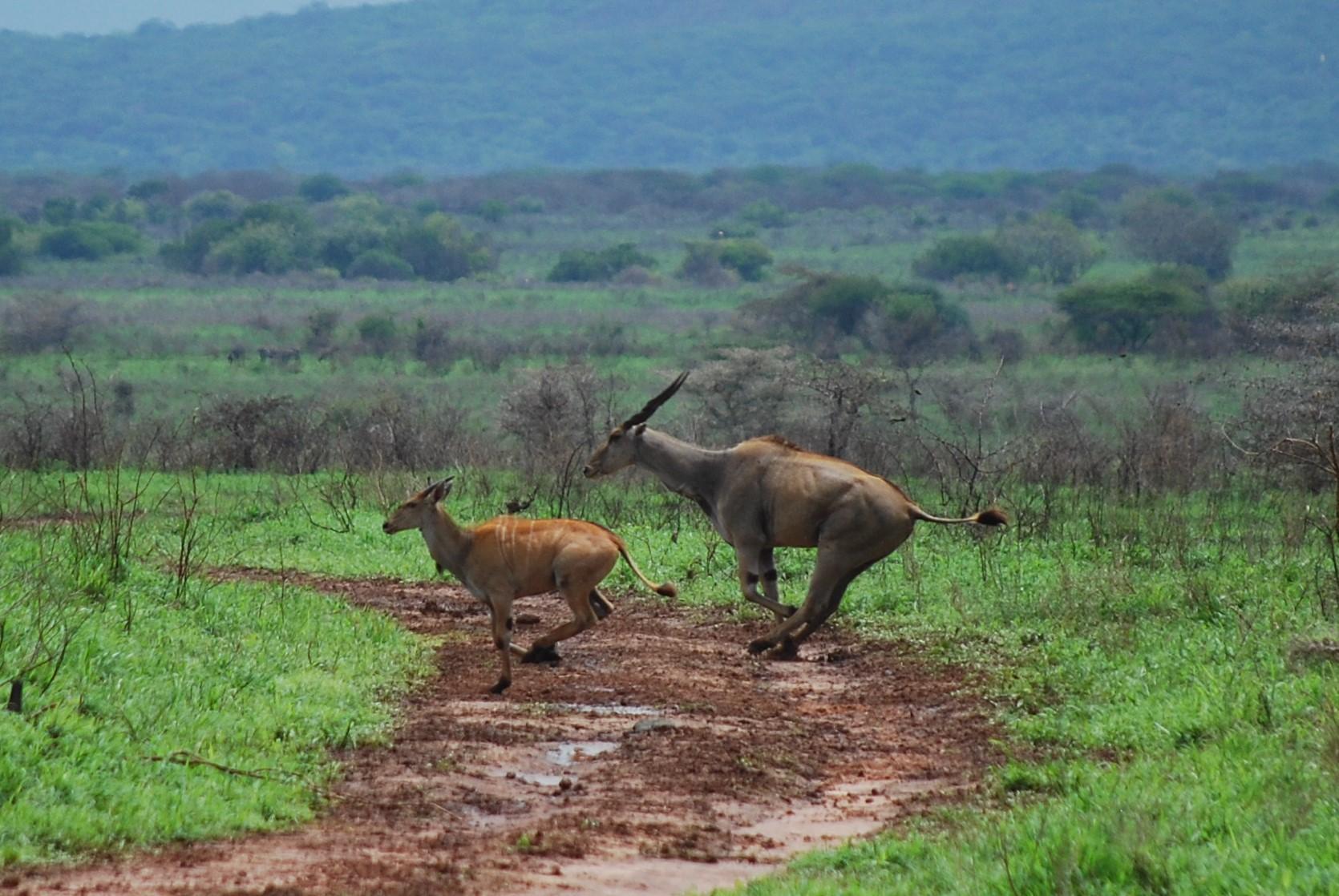 Der Mkomazi Nationalpark - raue, endlose Wildnis und noch sehr wenig besucht