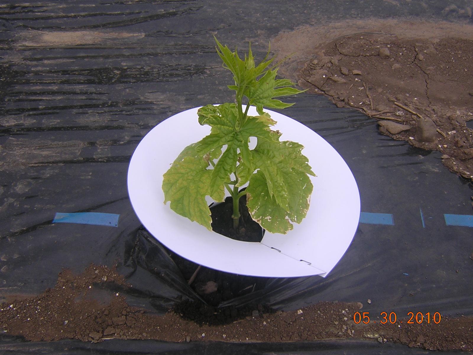 苗に水をやる器具