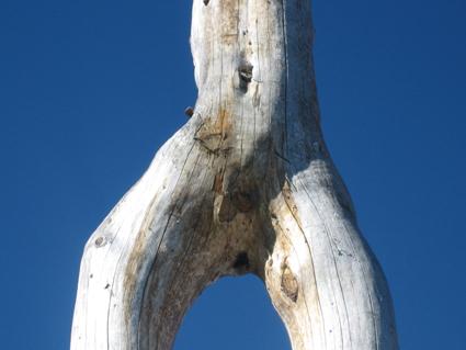 Erotosierung des Waldes, Foto
