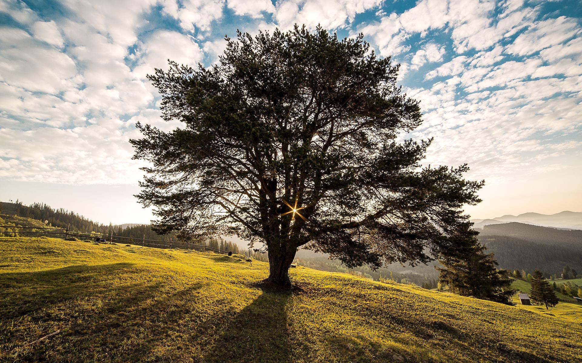 Gesucht zur Dauermiete: Grundstück (Wiese) in der Umgebung Langnau i.E. | Eggiwil