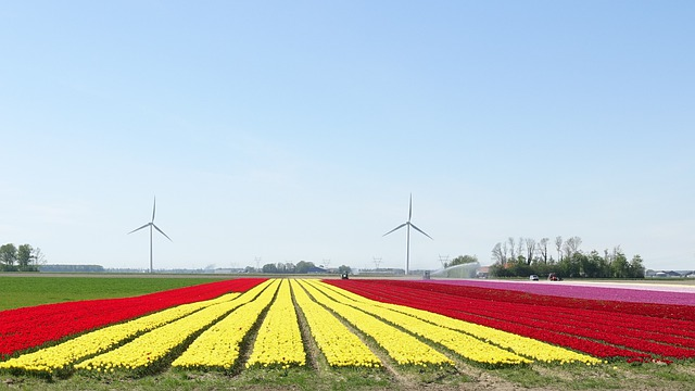 How to choose the right time to visit (and check from home) the tulip fields in Holland