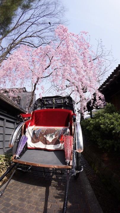 しだれ桜と人力車!栗の小径にて!