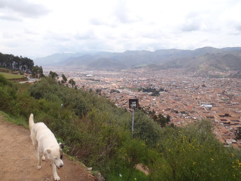 un perro en la calina, Cusco