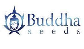 Buddha Seeds - Autofiorenti