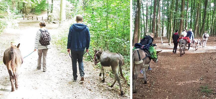 Esel-Führung Esel-Wanderung Freizeittipp Hamburg Eselwanderung Die Eselei Klangohren Alltagsabenteuer