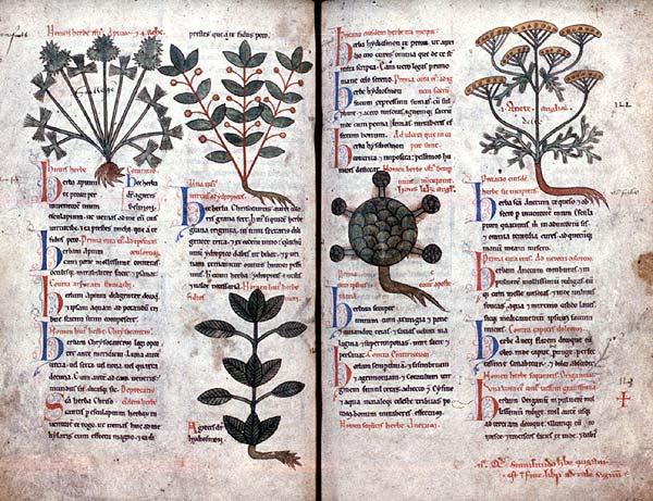 Herbier médicinal du Moyen-Age
