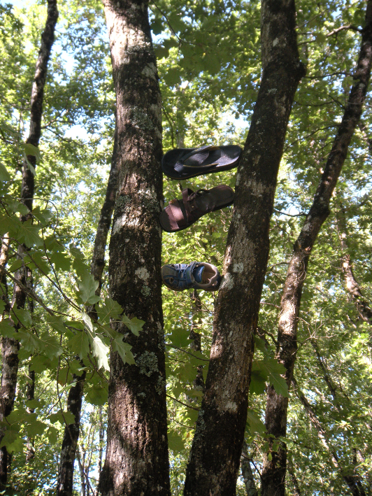 arbre à chaussures