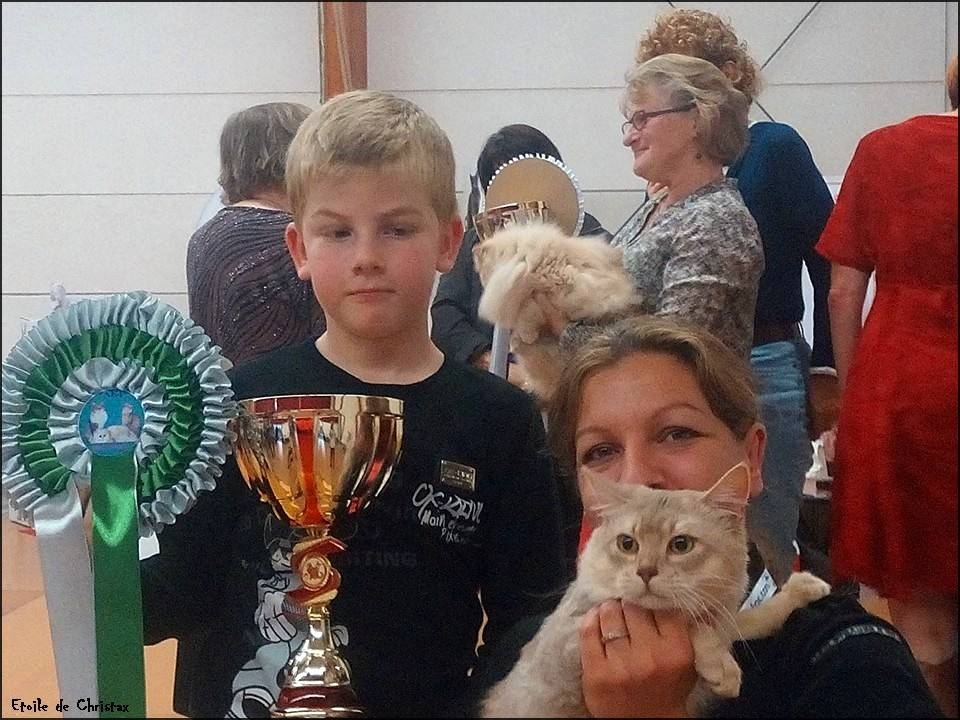 Kazaar en exposition, Best variété, Best in Show et nominé au Best of Best, il termine 2eme sur 196 chats !