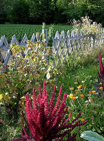 Kleiner Bauerngarten