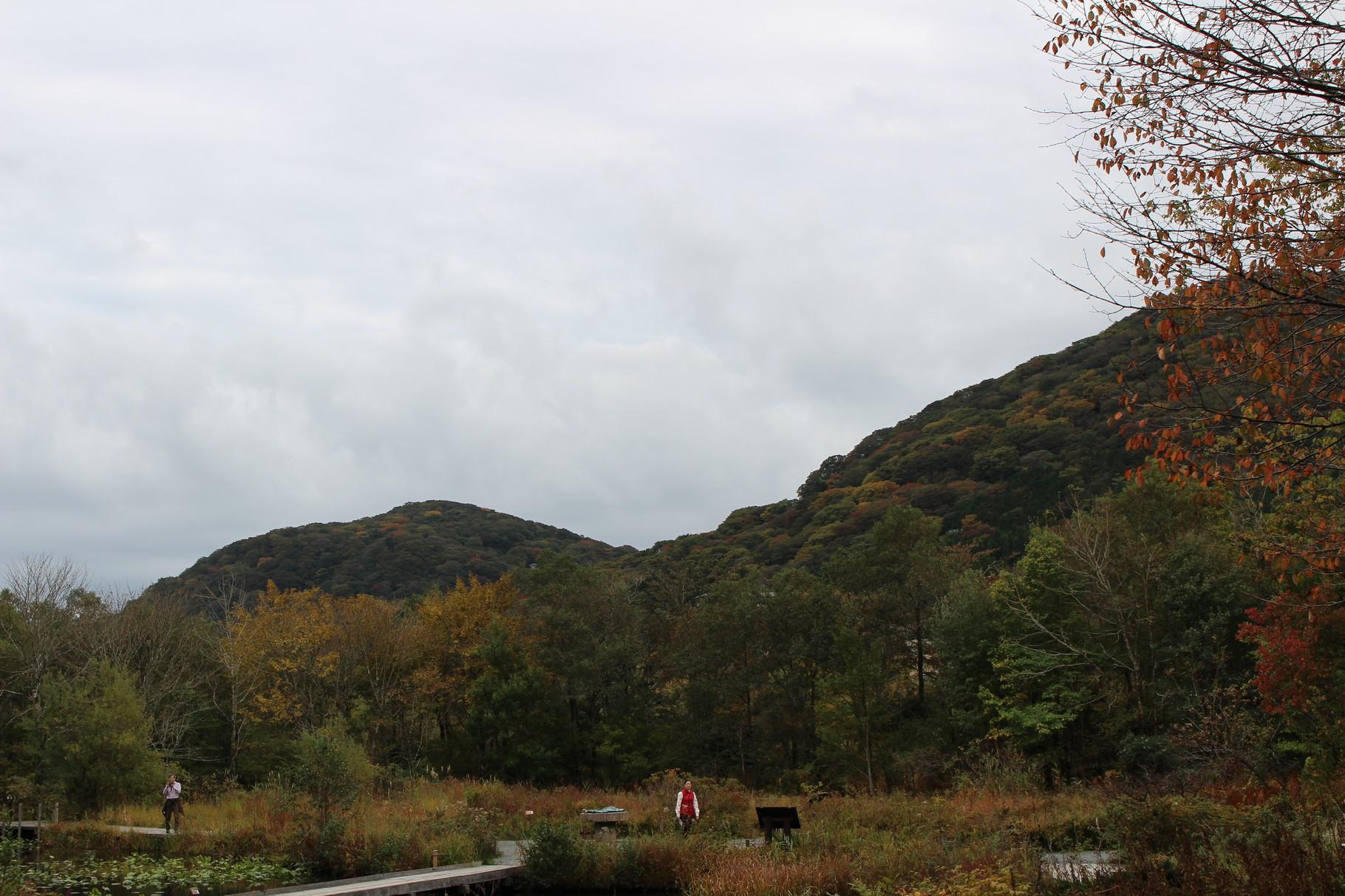 箱根湿生花園を散策・仙石原のススキを見学