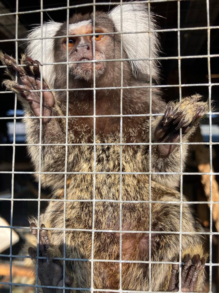 Illegaler Handel mit Affenkindern in Bitterfeld-Wolfen aufgedeckt
