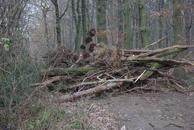 Waldweg-Hindernis