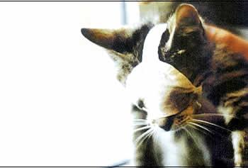 Junges Kätzchen, dem die Augen zugenäht wurden Foto: BUAV