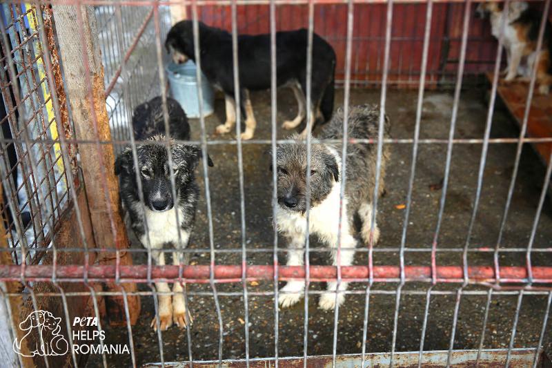 Andrea Sawatzki für Tiere in Rumänien