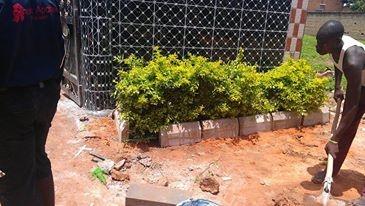 Arbustes devant le centre