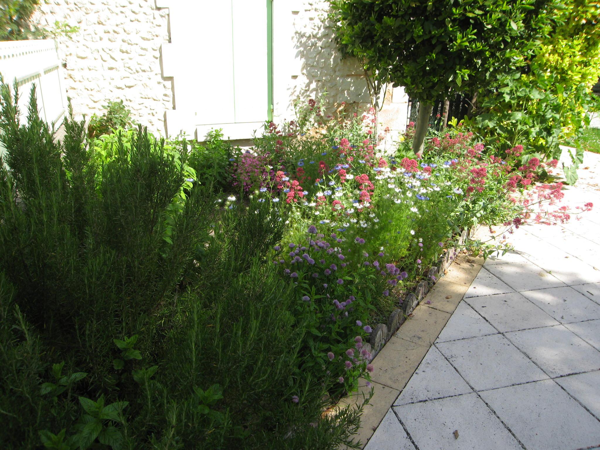 Le mini jardin d'aromatiques