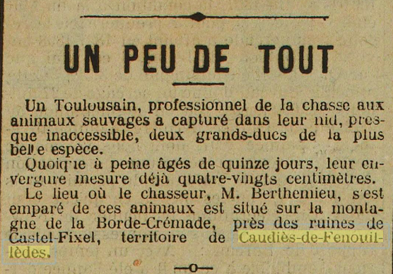 chasse grands-ducs